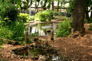 ザリガニ池
