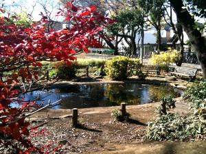 正門横のザリガニ池。